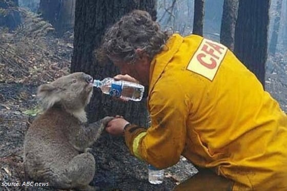 Helping People Affected by the Bushfires